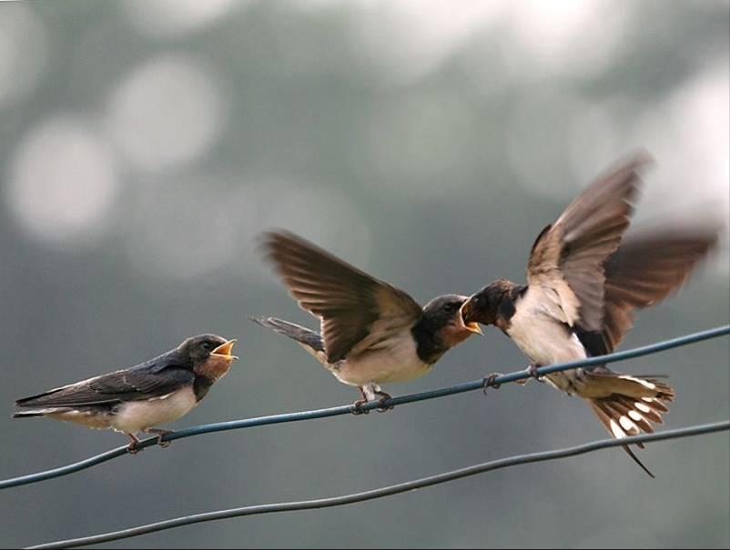 表现了燕子活泼机灵,俊俏可爱. 比较一下,说说哪句写得好,好在哪里?